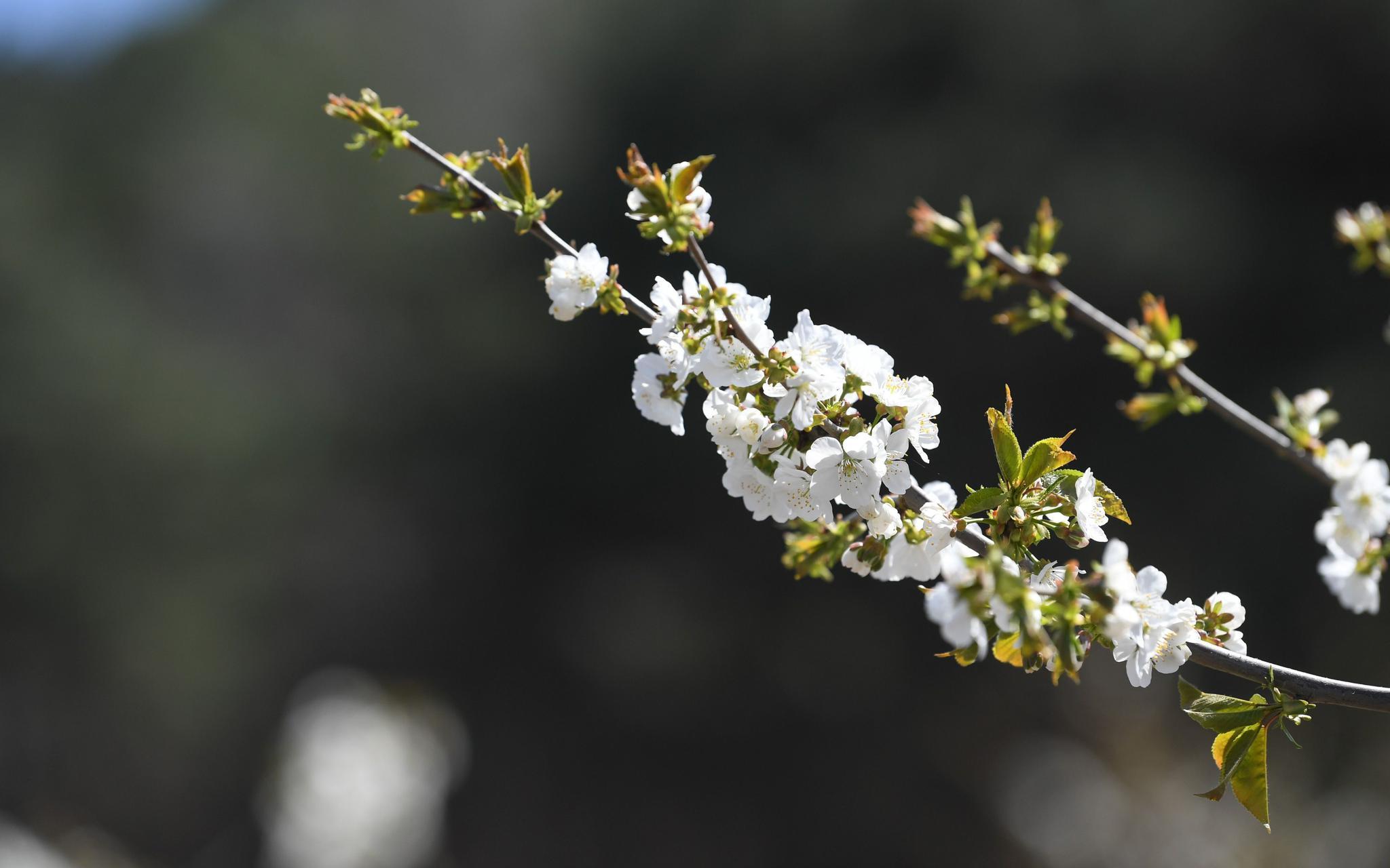 昌平山路进入野花盛开季图片