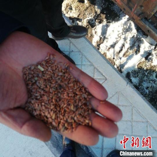 """增长超300% 中国口岸城市满洲里一季度进口俄亚麻籽实现""""逆势增长"""""""
