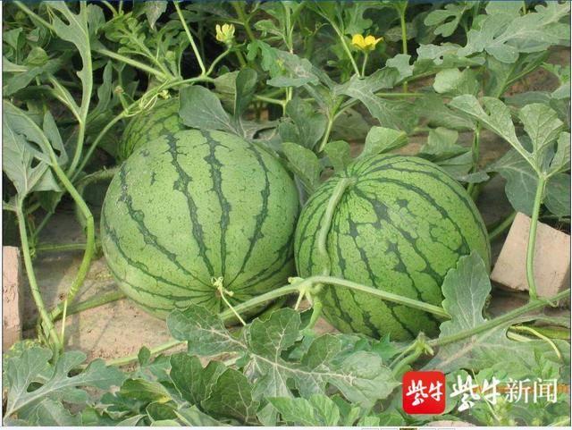 http://www.nthuaimage.com/nantongxinwen/48103.html