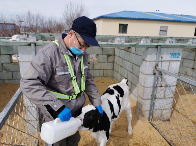 蒙牛第二笔10亿元短期免息资金提前支援到牧场