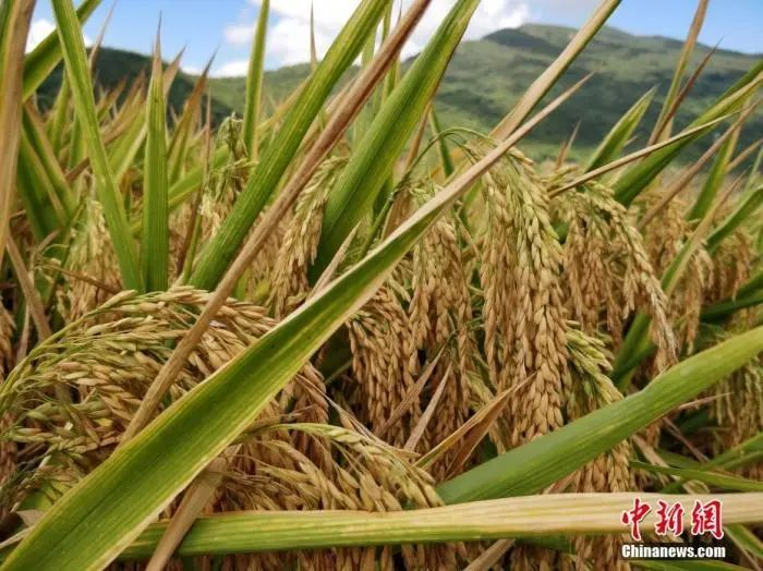 粮食危机要来?有人开始囤粮,中国粮食够吃吗?图片