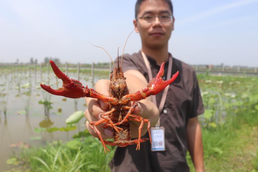 53天增投20亿,阿里巴巴提速中国最大数字助农平台建设