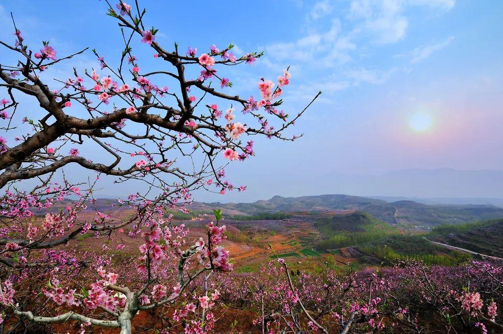 春望沂蒙花开 | 第九届山东·沂水(泉庄)网络桃花艺术节4月3日不见不散!