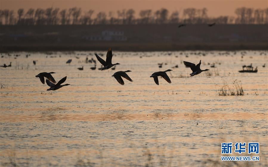 辽宁康平:卧龙湖湿地迎来大批候