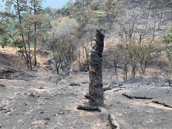 18名扑火队员和1名领导罹难地,装备和树木都被烧焦 汹涌消息记者 胥辉 图