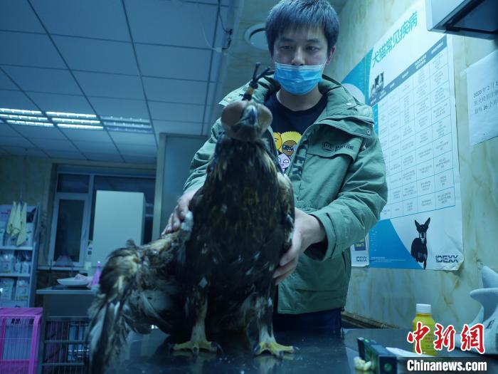 吉林各界合力救助国家一级保护动物金雕