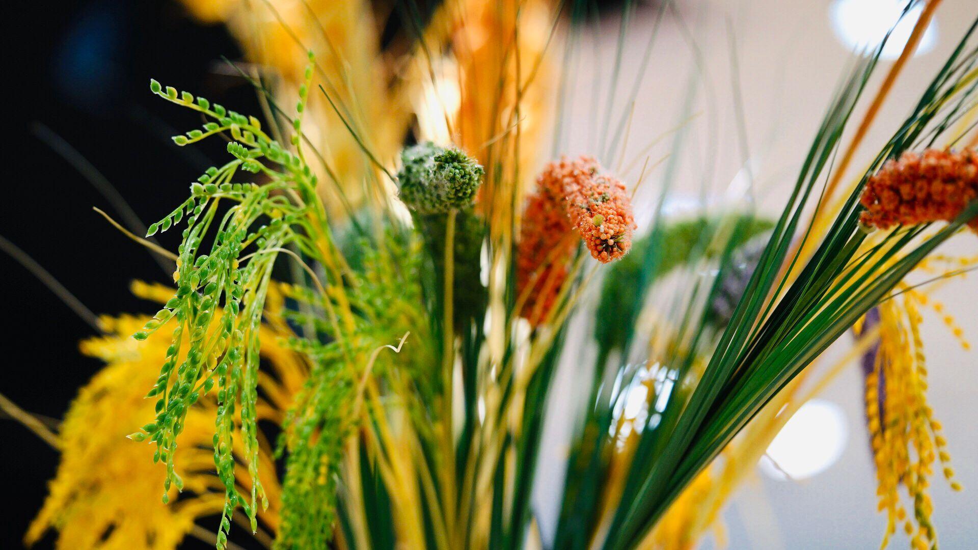 世界粮食计划署报告指出:全球粮食供应链暂未受影响