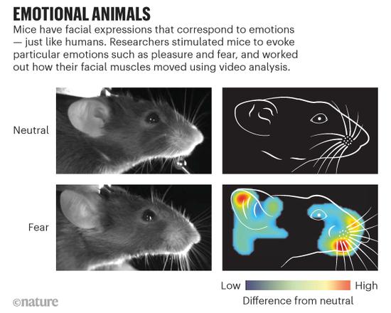外媒:科学家通过AI识别出老鼠的情绪