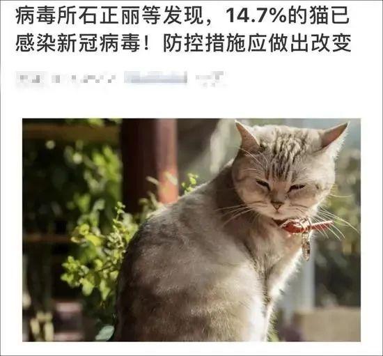 不敢相信!14.7%猫已感染新冠病毒?还会传染人?你更需要当心的是…