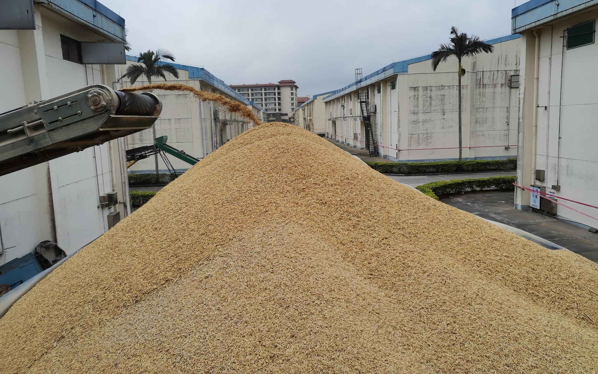 金健米业连发9次风险提示,专家称要防资本炒作粮食问题图片