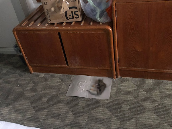 海口一隔离酒店客房出现老鼠:已消杀 向旅客致歉图片