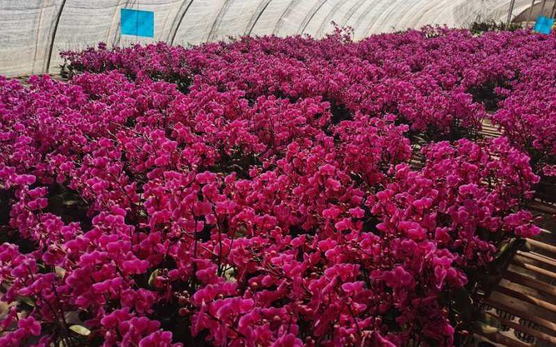 春天里 等待买家的花农图片