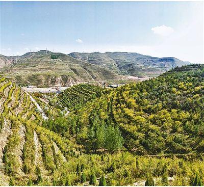 青海海东出台植树条例:每人每年