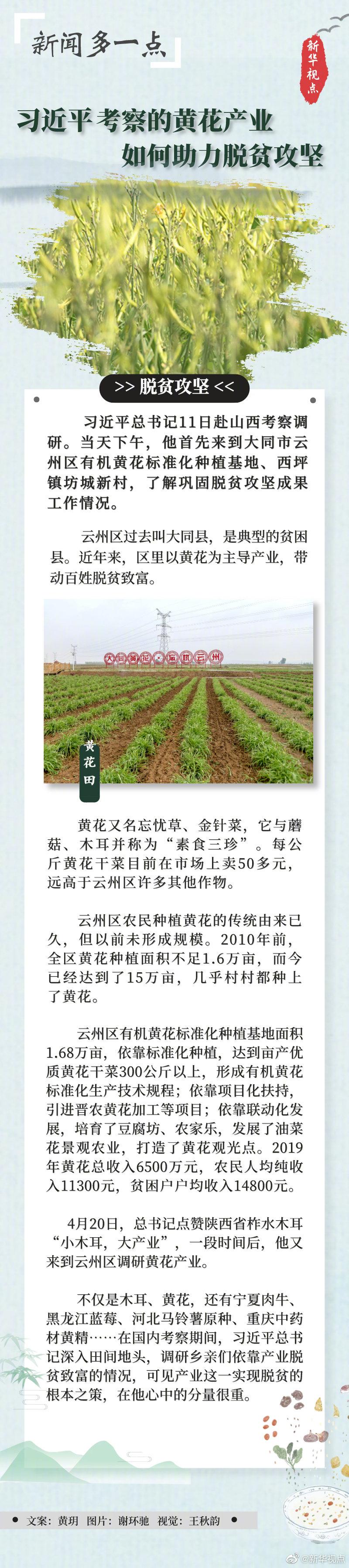 习近平考察的黄花产业,如何助力脱贫攻坚图片