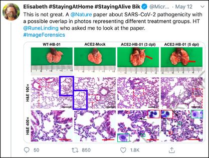 中国医学科学院 Nature 发布新冠论文,上线不到 1 周被疑涉嫌图片造假