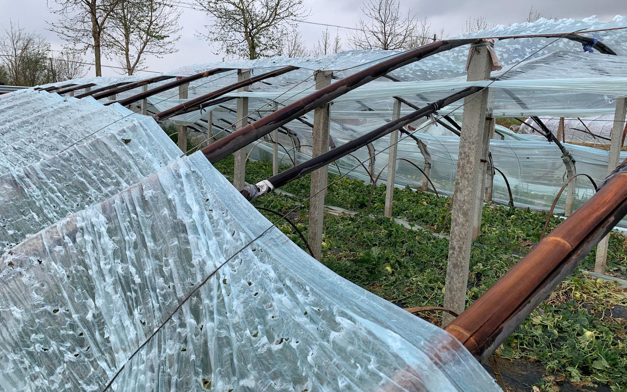【摩天测速】西18万亩农田摩天测速受雹图片