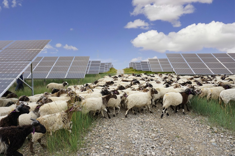 传统电力公司加快了绿色转型。 国家电力投资公司的清洁能源装机容量占50。8% 已安装