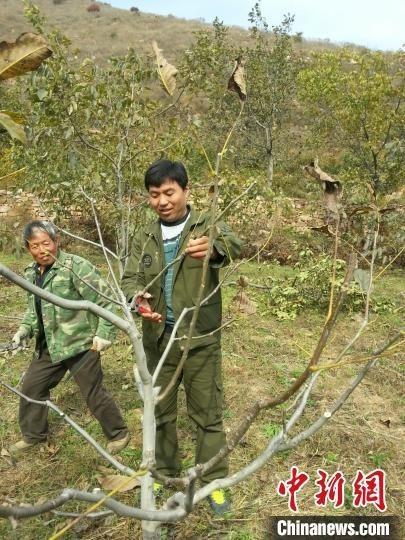 白钥帮助贫困户修剪核桃树。资料图 受访者供图