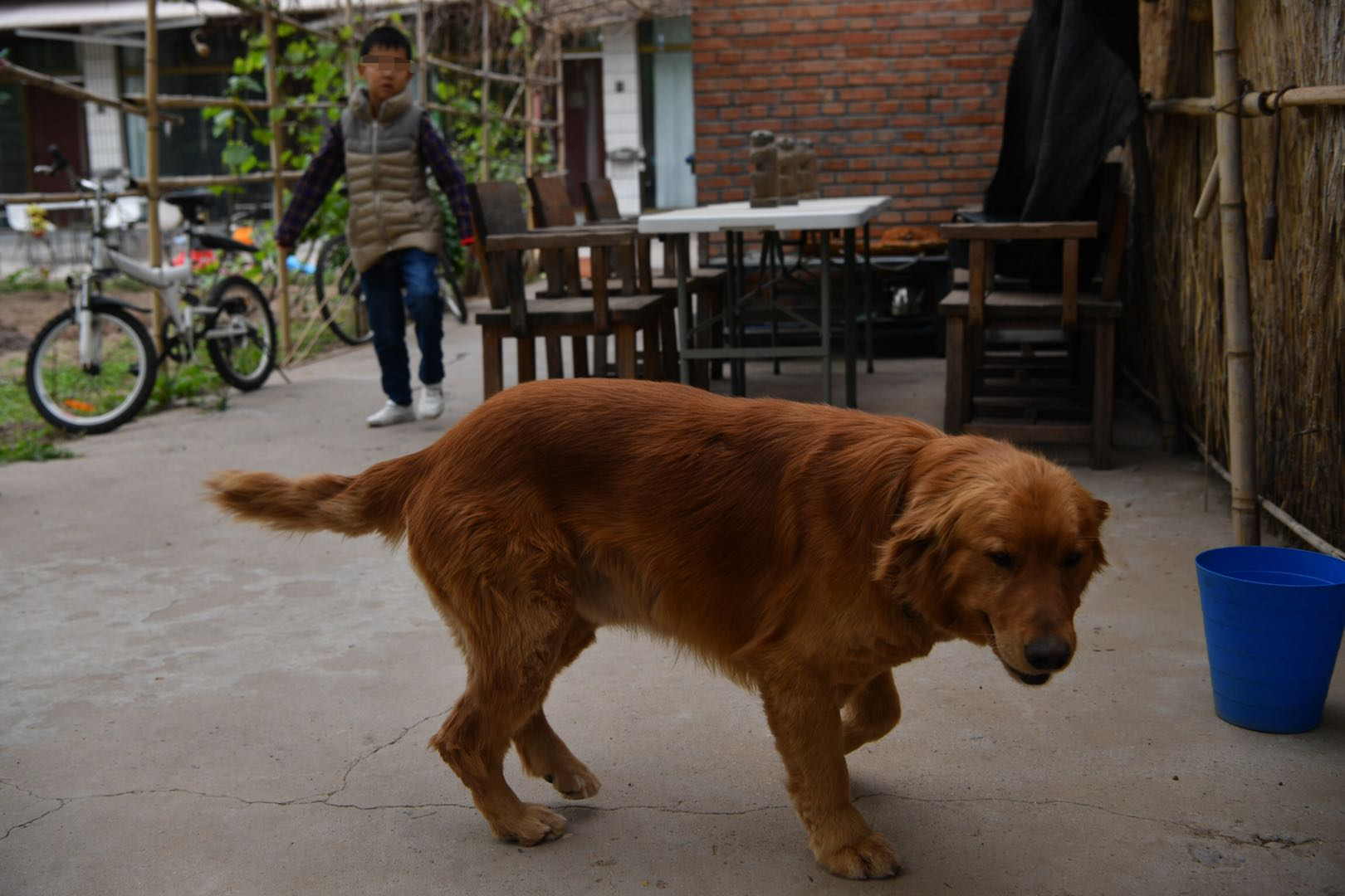 天富:两代精天富神抚慰犬接力5年陪伴脑图片