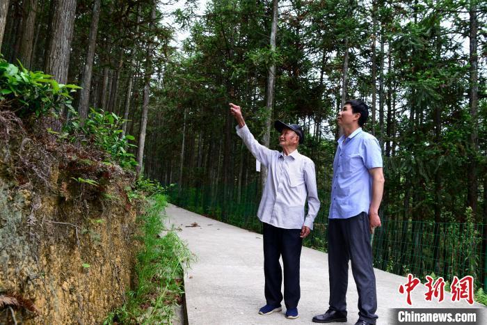 """福建后洋村:千亩绿林激活""""绿色经济""""图片"""