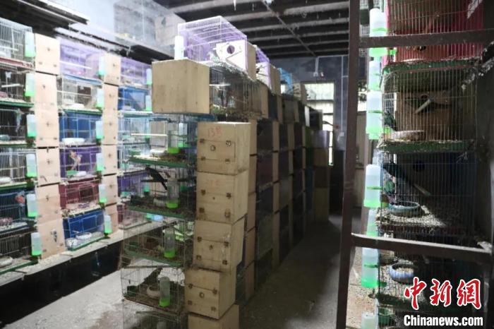 近900只鹦鹉藏身浙江台州一民房 抓获9名犯罪嫌疑人