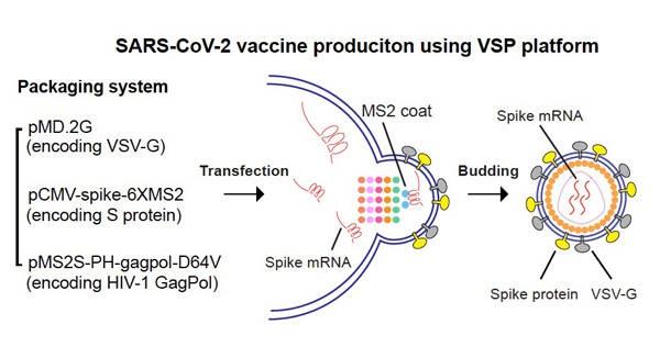 [摩天代理]病毒中国疫苗研发又迎新进摩天代理图片