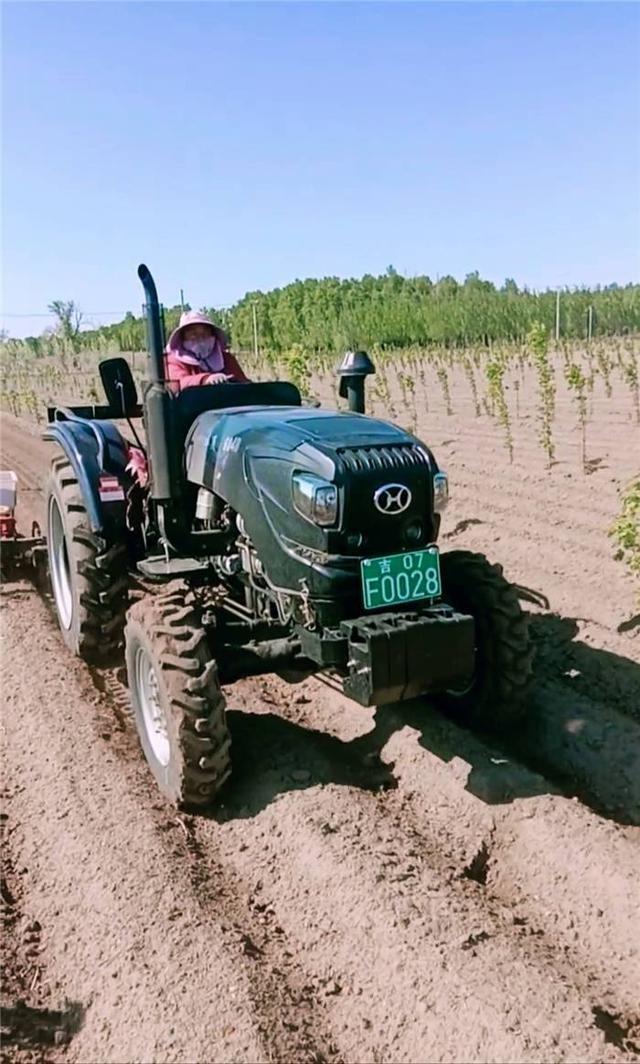 双辽广益家庭农场花生种植已收官