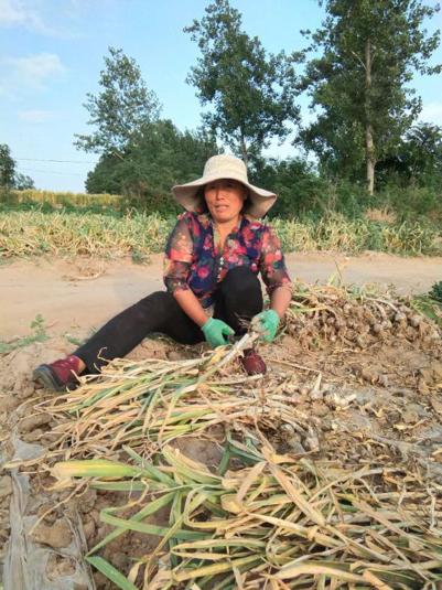 后疫情期的乡村中国:探索与希冀