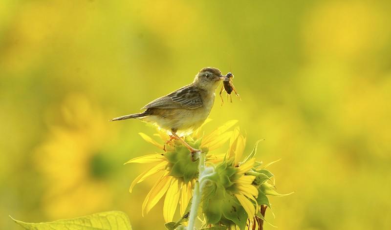 黄秋生与鸟的情缘