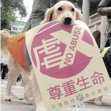 全国人大代表建议制定反虐待动物相关法律