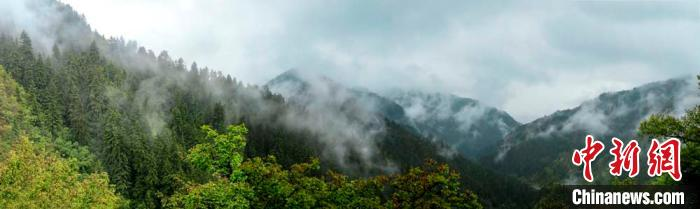 甘肃兴隆山雨后云雾缭绕 苍山翠