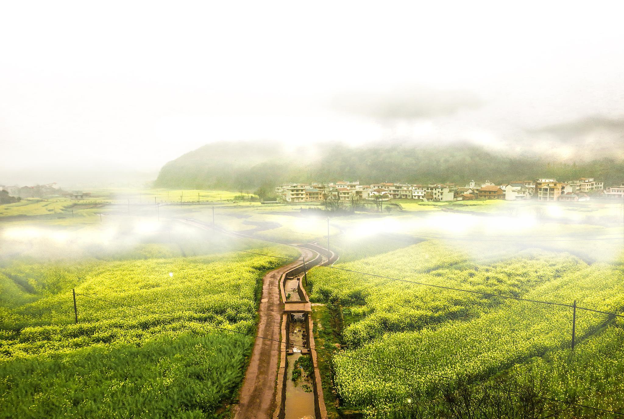 绿色的城市名片——写在咸宁通过国家森林城市复查之际