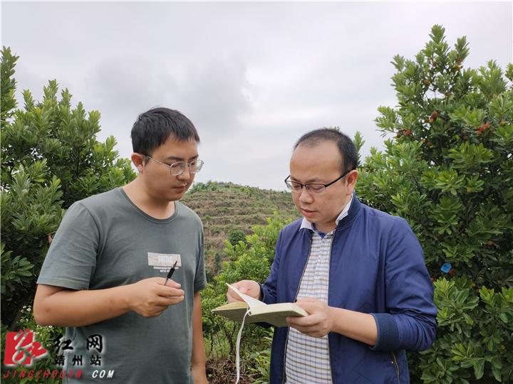 靖州:气象服务助力梅农丰产增收