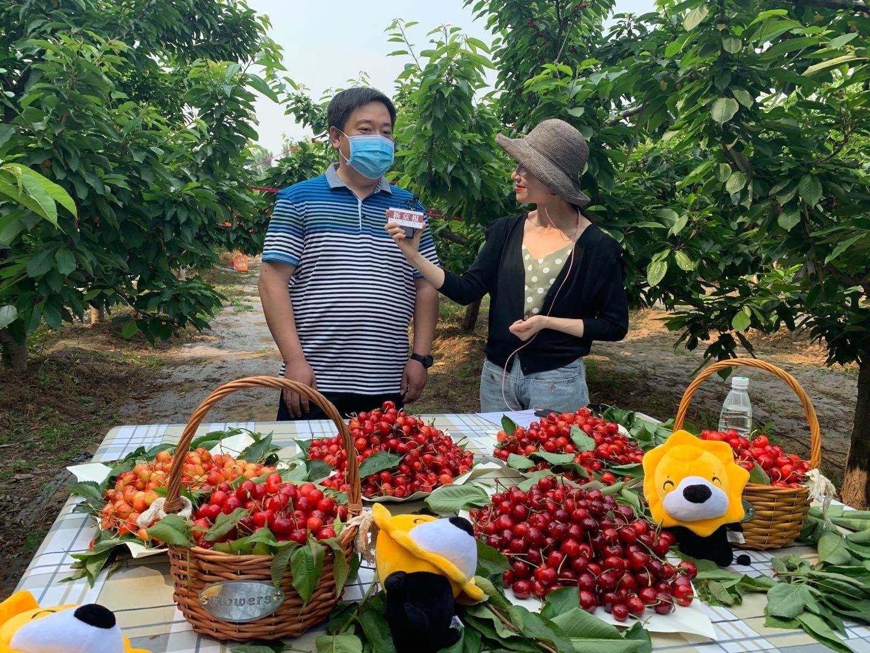扶农助农,新京报直播助力北京西集大樱桃图片