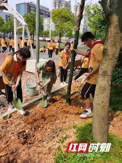 毕业季 小学生在母校种下心愿树