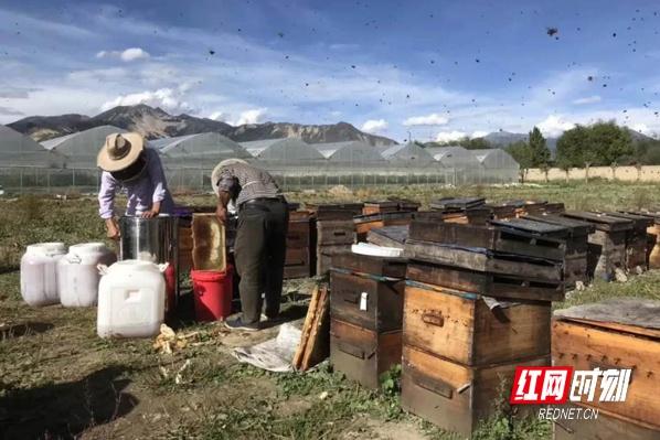 湖南省第八批专业技术人才短期援藏工作队全面布局各项工作