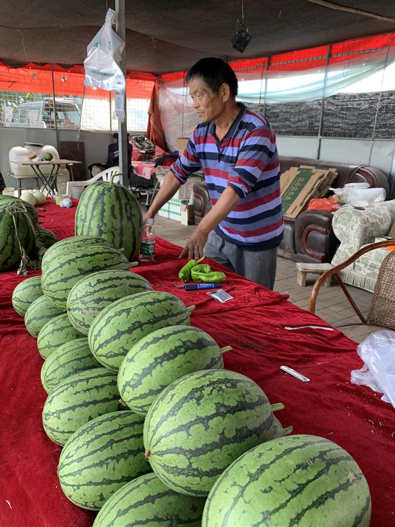 【摩天登录】又到了吃西瓜的摩天登录季节为什图片