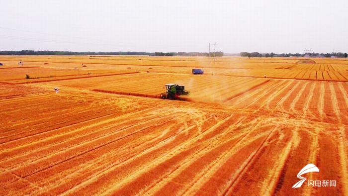 保障粮食安全,今年1-4月份德州累计进口粮食6.9万吨