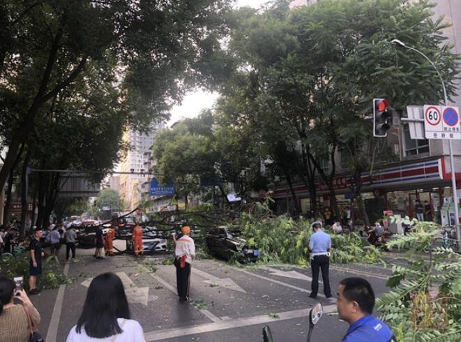 成都市二医院地铁站旁一大树倒下 交通被截断
