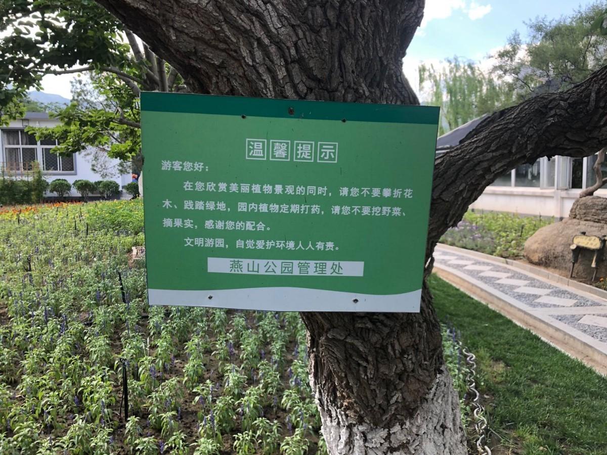 男孩燕山公园内偷吃桑葚,妈妈担心农药中毒,竟报警要求园方道歉!