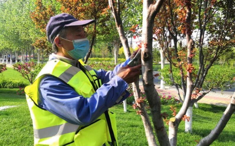 劳动节也没闲着 大兴安定镇绿化工人忙着养护绿地图片