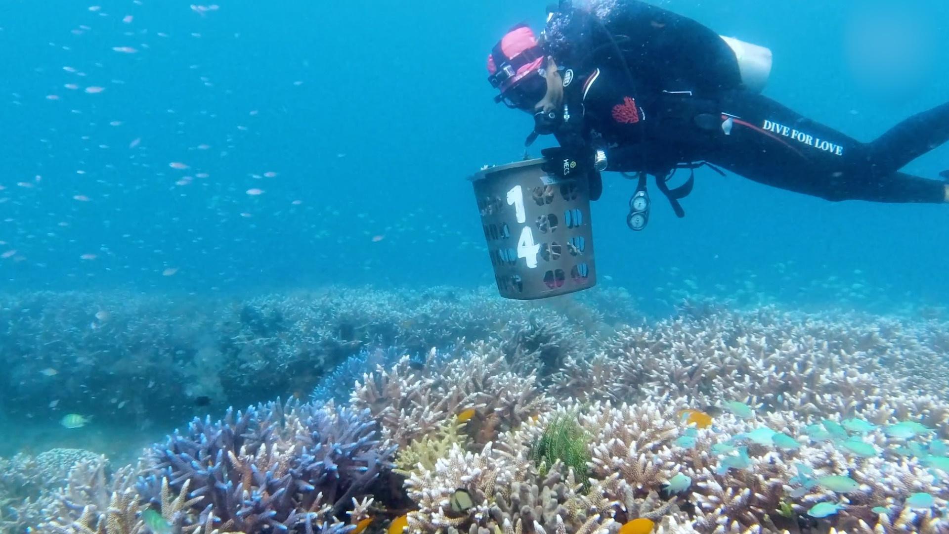 摩天招商的人潜摩天招商入海底固定珊瑚图片