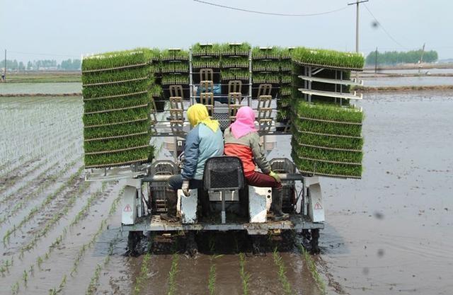 吉林市已完成旱田播种、水田插秧67万公顷