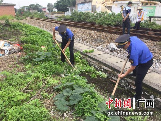 把铁路沿线当自家菜园圈地种菜?柳州城管出手了