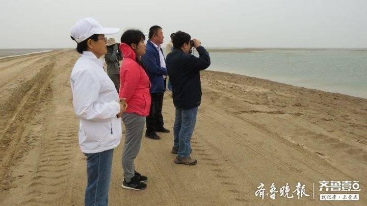 黄河三角洲国家级自然保护区申遗进入快车道