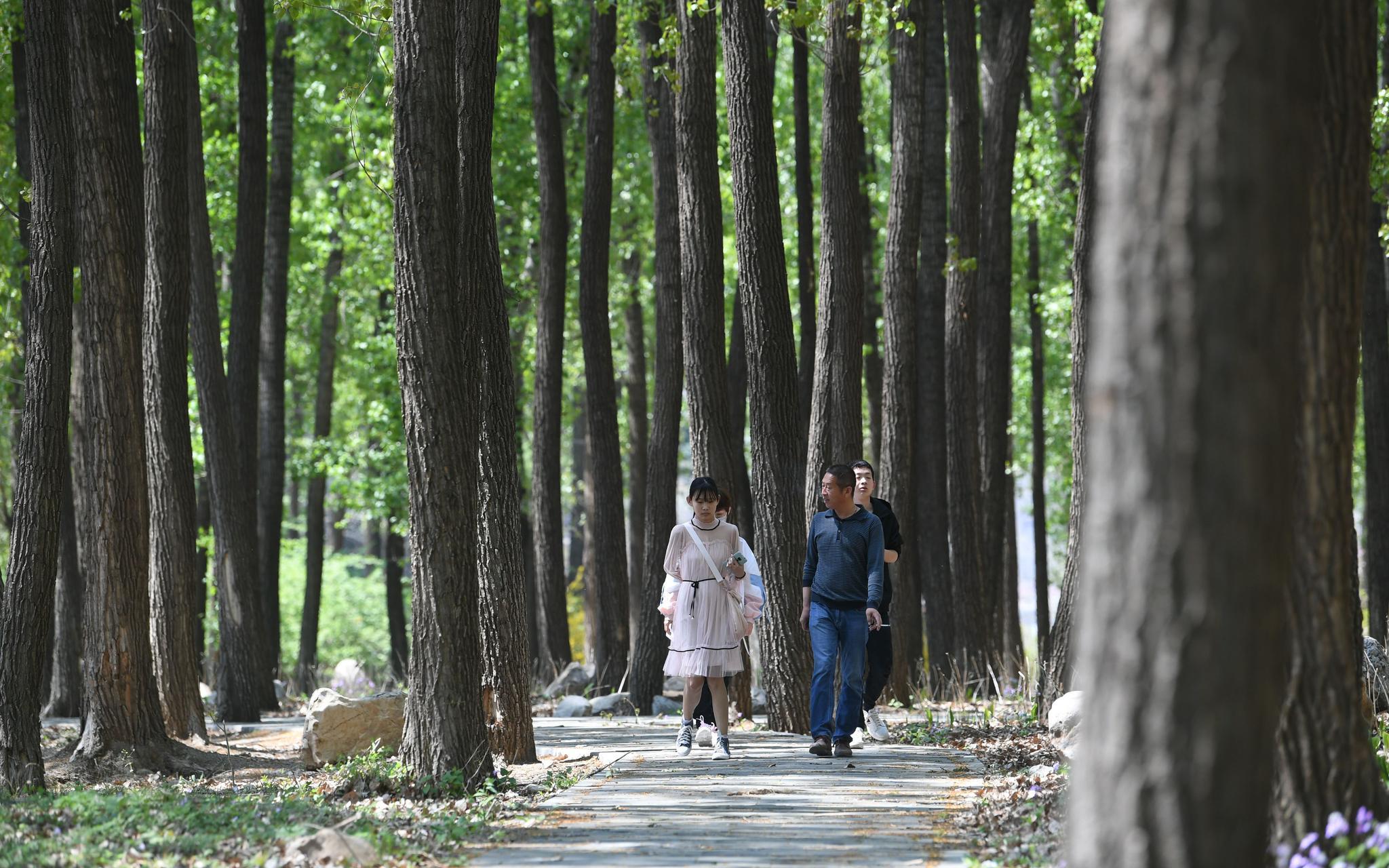 [摩天测速]少景又美乡村摩天测速小公园迎来城市游客图片