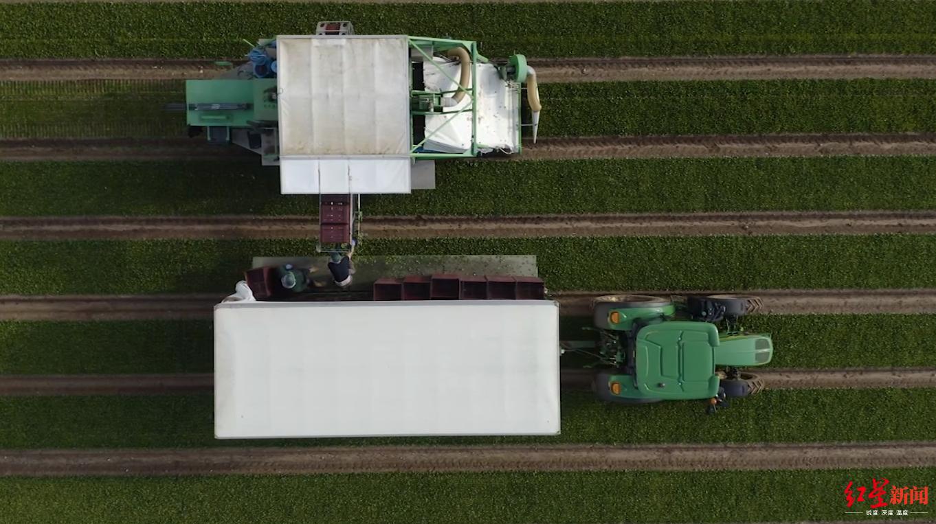 ▲劳工短缺是英国农场面临的一大难题,图据CNN