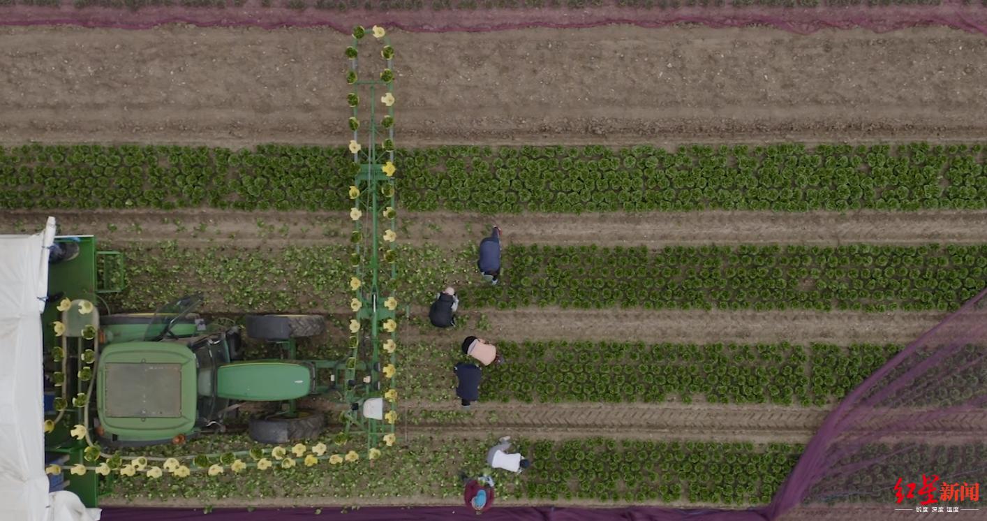 ▲农场主担心这些临时工能否坚持到夏天,图据CNN