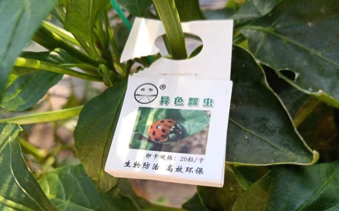 头虫子杏悦登录到了活跃期,杏悦登录图片