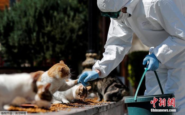 当地时间4月9日,土耳其伊斯坦布尔,一名身穿防护服的市政工作人员在Sultanahmet广场喂流浪猫。